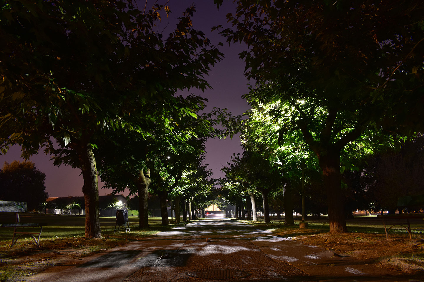 Park by night