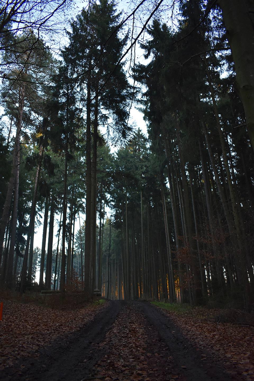 Foresta al crepuscolo